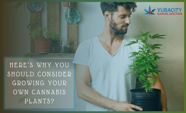 growing your own cannabis plants